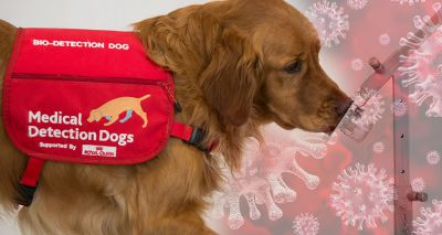 Sniffer dogs could join battle against COVID-19