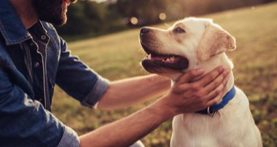 Study reveals impact of canine epilepsy on owners